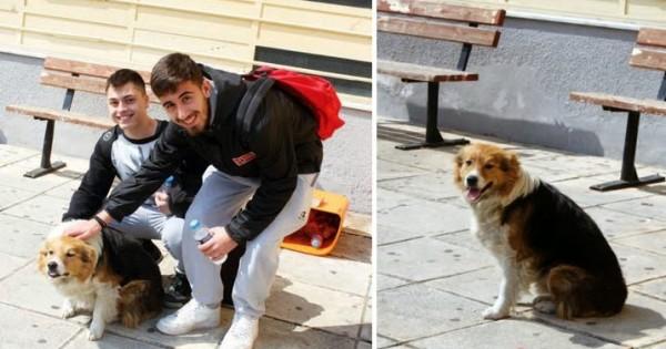 Το 3o λύκειο Κομοτηνής υιοθέτησε έναν αδέσποτο σκύλο!