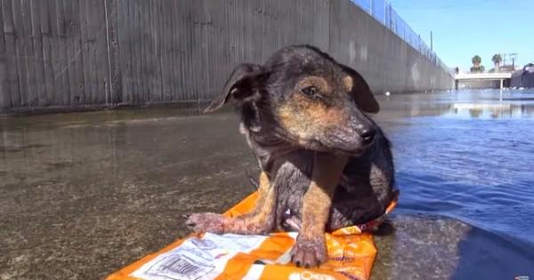 H διάσωση ενός κουταβιού που του έκοψαν το πόδι και το πέταξαν από 9 μέτρα ύψος (video)