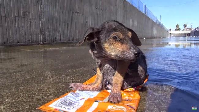 Σκύλος κουταβάκι διάσωση
