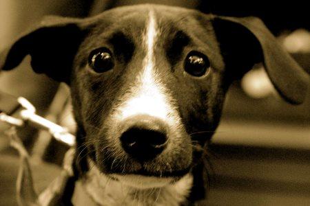 CSI με κτηνιατροδικαστές διαλευκάνει υποθέσεις κακοποίησης ζώων