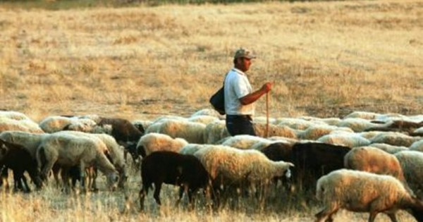 Πολλά μπράβο: Κτηνοτρόφος στις Σέρρες δεν αφήνει τα ζώα του κι ας κινδυνεύει από τις πλημμύρες