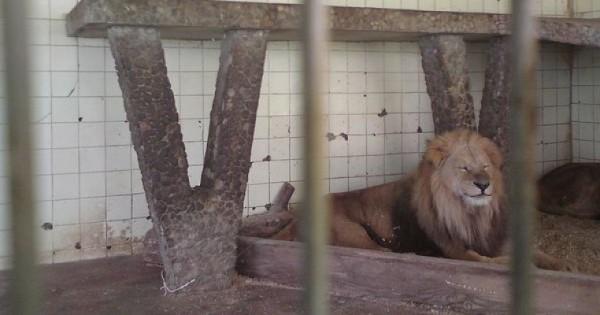 Επιτέλους: «Λουκέτο» στον ζωολογικό κήπο-κολαστήριο των Τιράνων