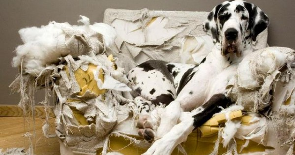 Τι σκέψη κάνει ο σκύλος σου όταν μένει μόνος του;