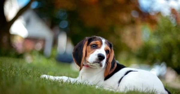 Ακράτεια: Το κουτάβι μου δεν μπορεί να κρατηθεί! Τι να κάνω;