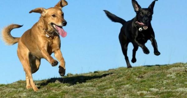 Πώς η έλλειψη άσκησης επηρεάζει το σκύλο σου