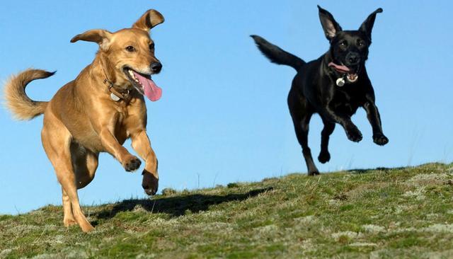 Σκύλος έλλειψη άσκησης