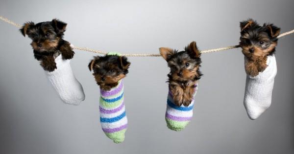 Αυτά είναι τα ομορφότερα «μικρά» σκυλιά του κόσμου [photos]