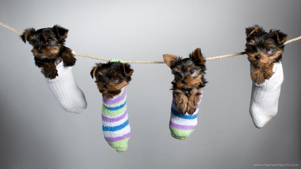 μικρά σκυλιά