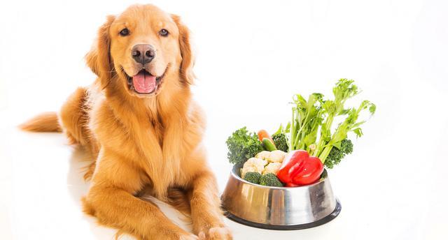 φρούτα Σκύλος λαχανικά διατροφή