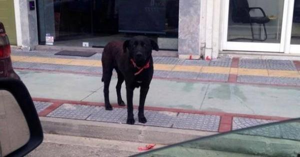 «Ορφανός» έμεινε ο σκύλος-Χάτσικο που περίμενε στωικά το αφεντικό του στην Κομοτηνή