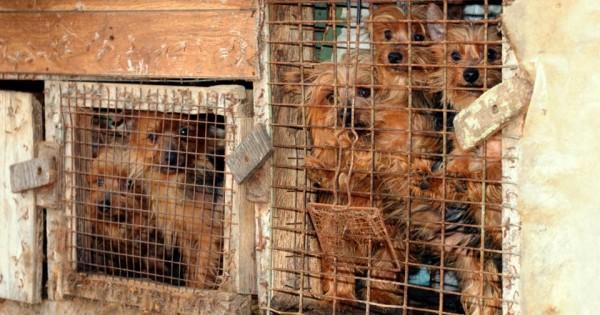 Η φρίκη στα «εργοστάσια κουταβιών» puppy mills. Ποιοι είναι οι πελάτες τους; (video-εικόνες)