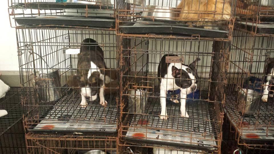 κουτάβια puppy mills