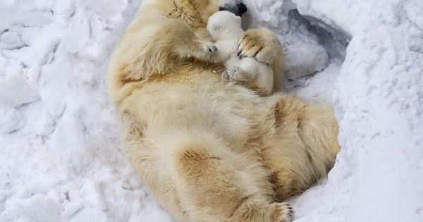 23 μοναδικές φωτογραφίες του ζωικού βασιλείου σε τρυφερές οικογενειακές στιγμές