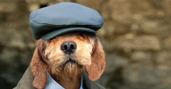 10 συμβουλές για τη φροντίδα του υπερήλικου σκύλου