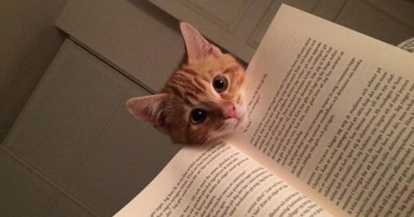 Κατοικίδια που δεν έχουν καμία πρόθεση να σε αφήσουν να διαβάσεις! (εικόνες)