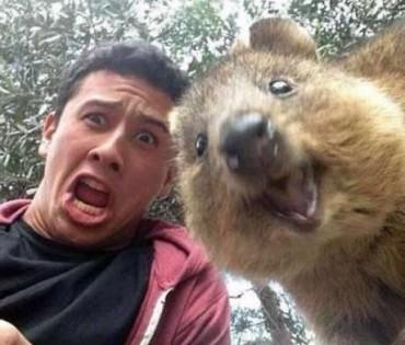 Το μικρό καγκουρό που τρελαίνεται με τις selfie! (εικόνες)