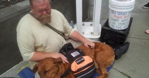 Πώς μια άγνωστη γυναίκα έσωσε τη ζωή ενός σκύλου και του άστεγου ιδιοκτήτη του