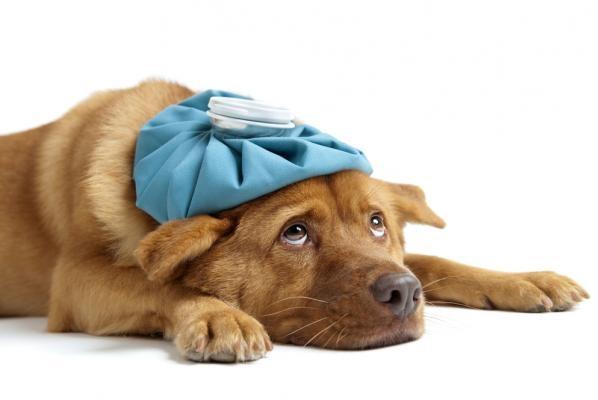 Φαρμακείο του Σκύλου Σκύλος