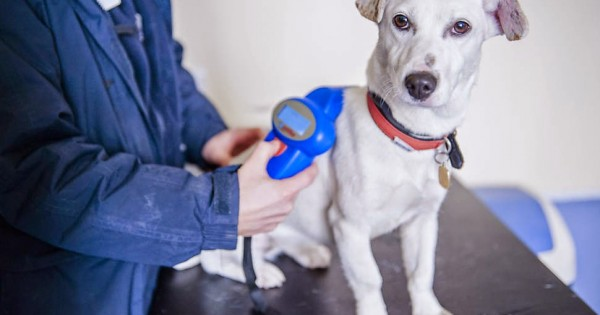 Τέλος στο αλαλούμ με τα μικροτσίπ: Οι κτηνίατροι θα τα καταχωρούν άμεσα μόνοι τους
