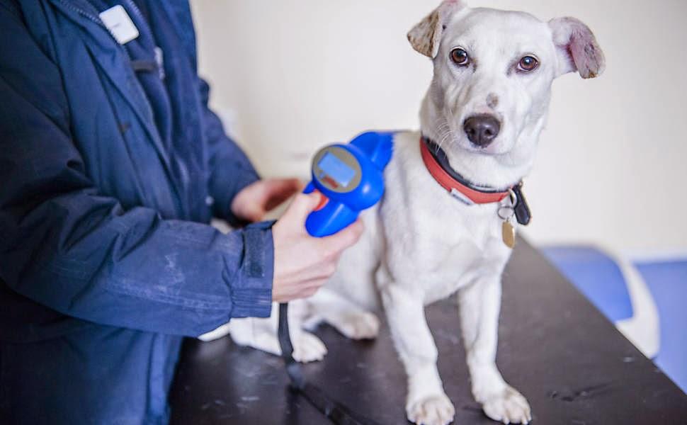 μικροτσίπ κτηνίατροι