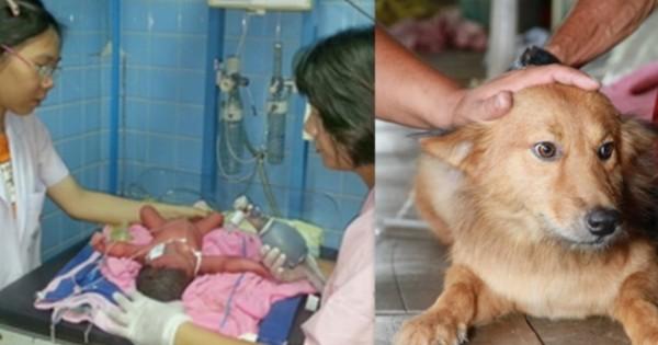 Σκύλος έσωσε νεογέννητο που βρήκε στα σκουπίδια!
