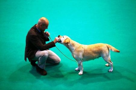 Οι σκύλοι είναι «τέρατα μνήμης» σε σύγκριση με τα άλλα ζώα