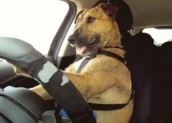 Φοβεροί σκύλοι οδηγούν και μας αποδεικνύουν τη νοημοσύνη τους! (βίντεο)