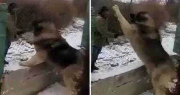 Δείτε τον μεγαλύτερο σκύλο στον κόσμο «εν δράσει» (βίντεο)