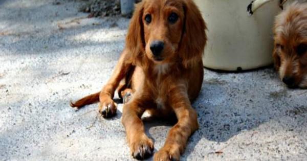 Εντολή Πανούση στους αστυνομικούς: «Να προστατεύετε τα κακοποιημένα ζώα και να τα φροντίζετε μέχρι να βρουν στέγη»