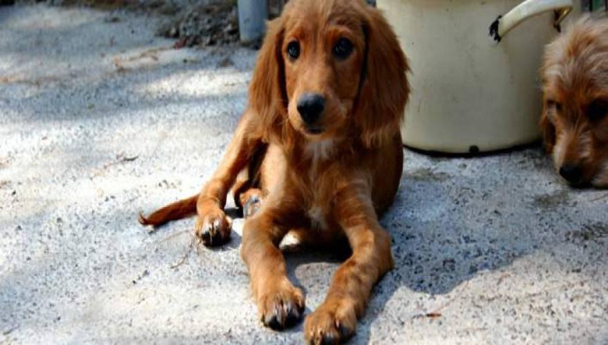 Γιάννης Πανούσης αδέσποτα σκυλιά