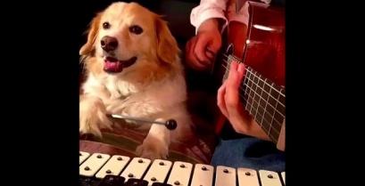 Γνωρίστε τον σκύλο – μουσικό! (Βίντεο)