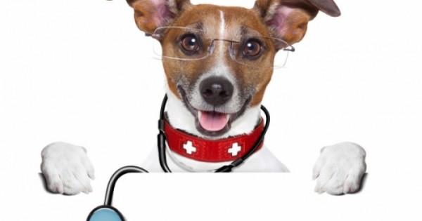 Φράνκι: Ο σκύλος που κάνει διάγνωση καρκίνου καλύτερα και από τους γιατρούς