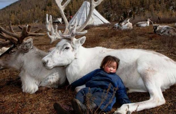 Τάρανδοι Μογγολία