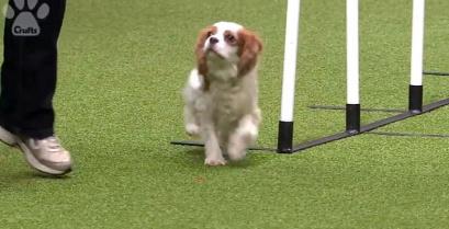 Σκέτο ταλέντο αυτός ο σκύλος (βίντεο)