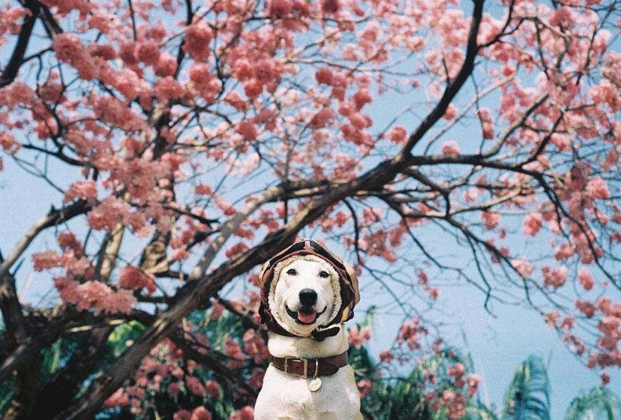 Σκύλος Εικόνες