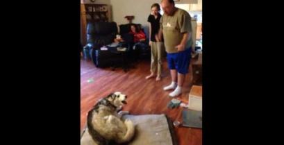 Ξεκαρδιστική λογομαχία με το χάσκι (Βίντεο)