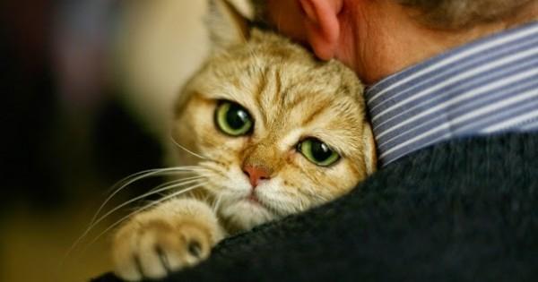 Πού να χαϊδεύετε τη γάτα σας και πού όχι!