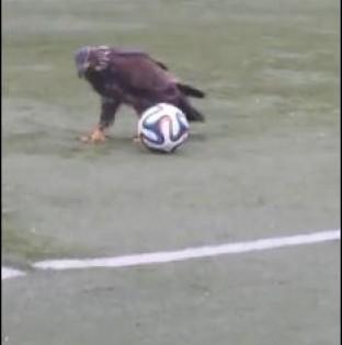 0 αετός που θα θυμίζει… Μέσι! (βίντεo)