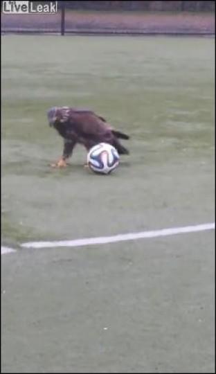 Βίντεο Αετός
