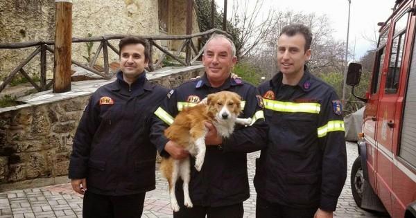 Βέροια: Πυροσβέστες έσωσαν σκύλο που εγκλωβίστηκε στον Τριπόταμο