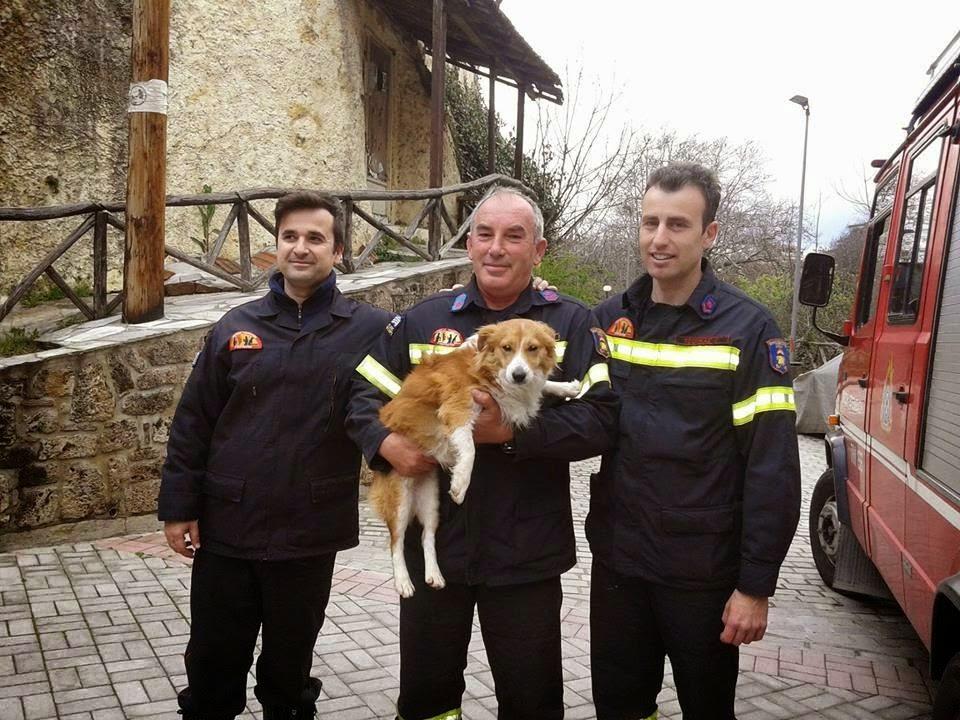 Σκύλος πυροσβέστες Βέροια