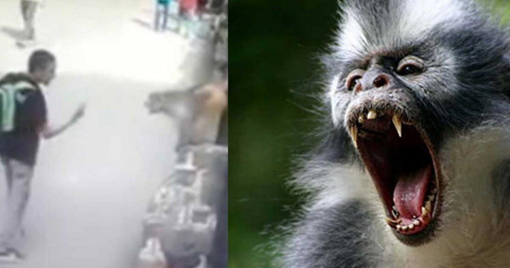 πίθηκος μεσαίο δάκτυλο αγόρι