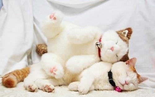 20 ζώα ποζάρουν με τα λούτρινα ομοιώματά τους! (Εικόνες)