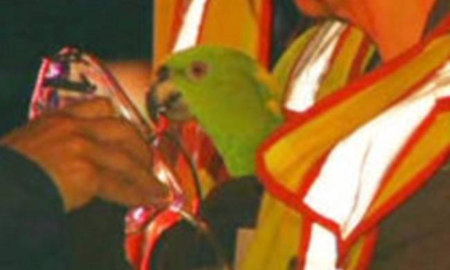 Παπαγάλοι Εικόνες