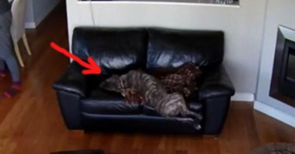Δείτε πώς αντέδρασε αυτός ο σκύλος καθώς κοιμόταν (βίντεο)