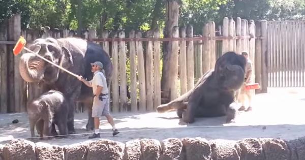 Όλα κυλούσαν ομαλά μέχρι να αρπάξει μια σκούπα αυτό ο ελέφαντας! (Βίντεο)