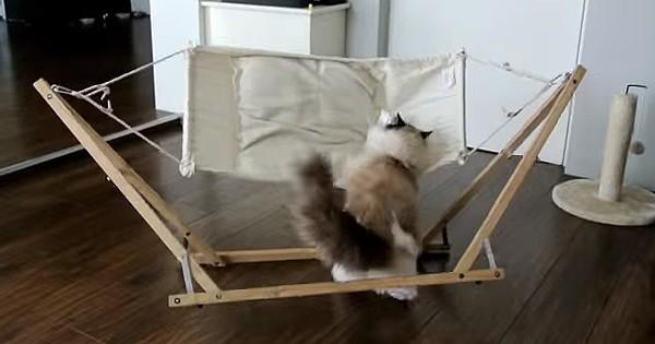 Αγόρασαν στη γάτα τους αυτό το απίστευτο κρεβάτι αλλά δεν περίμεναν να έχει αυτή την αντίδραση! (Βίντεο)