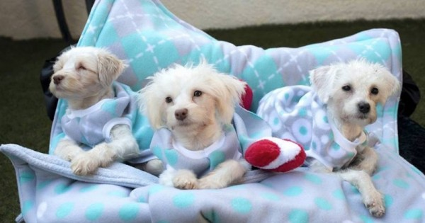 Η συγκινητική ιστορία τριών σκυλιών με ειδικές ανάγκες