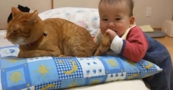 Η πιο υπομονετική γάτα (Βίντεο)
