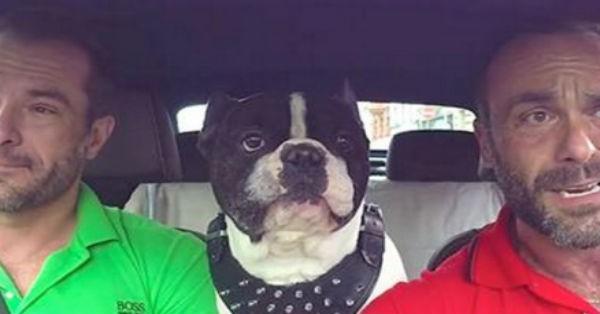 Μπορεί αυτός ο σκύλος να καταλαβαίνει άνετα 4 γλώσσες αλλά κάτι άλλο θα σας εκπλήξει… (Βίντεο)